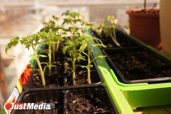 Зона офисного земледелия: разбираемся в проблемных всходах и засухе на грядках