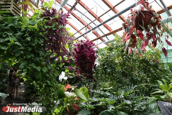 Растения-убийцы, «сказочные» цветы и плоды со вкусом битого стекла: JustMedia совершил ботаническую «кругосветку» в Екатеринбурге