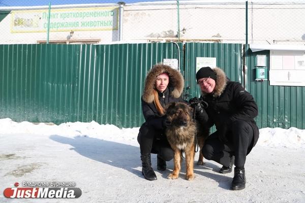 В Екатеринбурге устраивают тест-драйв бездомных собак, чтобы спасти им жизнь. СПЕЦПРОЕКТ