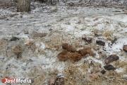 Шаг влево, шаг вправо - говно! Разбираемся с экспертами, как «разминировать» дворы Екатеринбурга от собачьих фекалий . ФОТО, ВИДЕО
