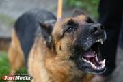 Громко крикнуть или лечь на землю. Что делать, если на вас нападает агрессивная собака. ВИДЕОУРОКИ