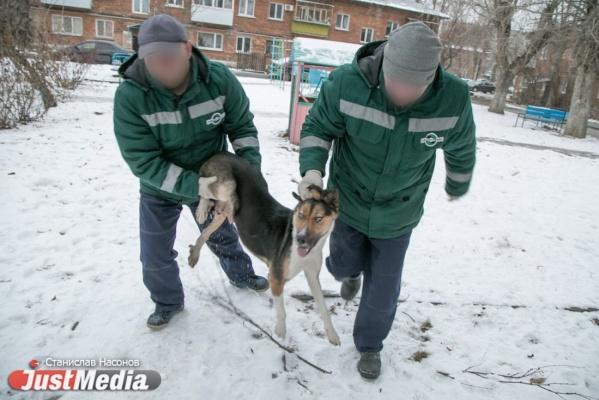 За два часа специалисты отловили двух собак
