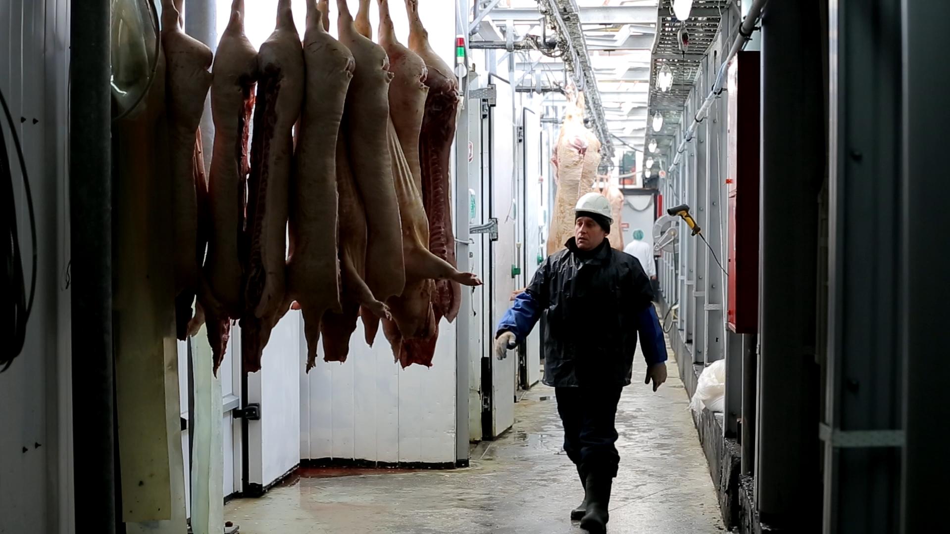 Полный производственный цикл на свинокомплексе «Уральский» теперь отслеживают в режиме онлайн