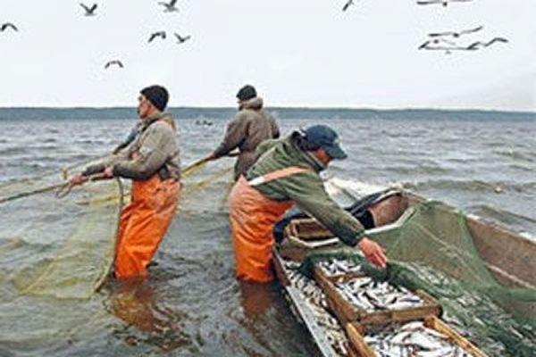 как оформить лицензию на ловлю рыбы сетью