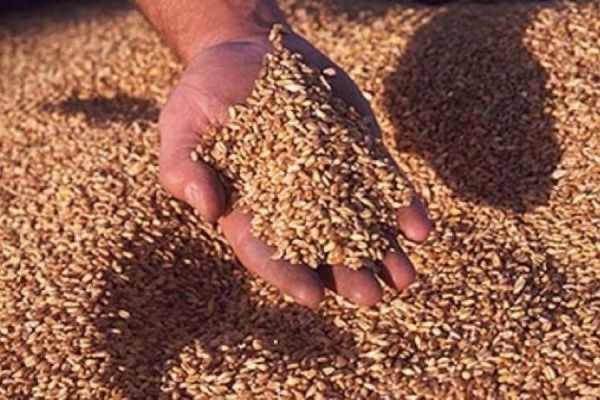 предназначен для сколько мы продаём зерна построения