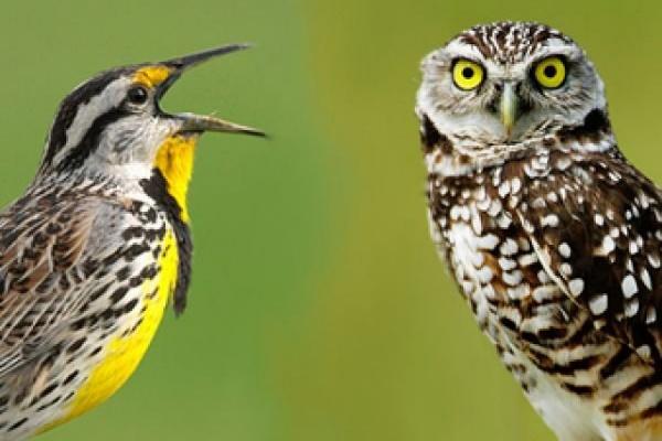 Как подбирать матрац, если вы жаворонок или сова?