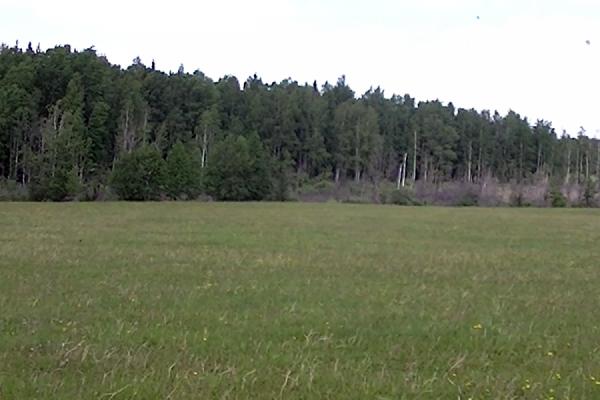 На этом поле нашли тело маленького Вити