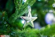 В Свердловской области завтра стартует сезон заготовки новогодних елок