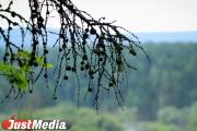 В Саду Казанцева появятся потомки деревьев вековой давности