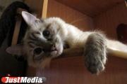 Екатеринбуржцам предлагают 14 февраля проявить любовь к бездомным животным