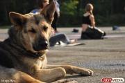 Екатеринбуржцы смогут принять участие в благотворительной прогулке с бездомными собаками