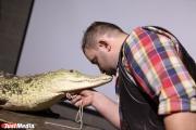 Крокодил Кеша и лемур Спартак? В Екатеринбургском зоопарке выбирают зоомистера