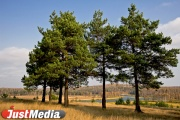 К юбилею Победы Куйвашев засеет Свердловскую область лесами
