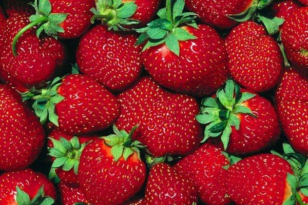 Греческие власти попросили Россию разрешить ей поставки фруктов и ягод