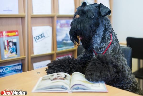 В Екатеринбурге собаку пустили в библиотеку, чтобы она послушала, как читают дети
