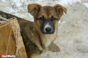 В Екатеринбурге в феврале около пятидесяти безнадзорных животных обрели новый дом