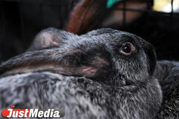 Заяц устроил ДТП с пострадавшими на свердловской трассе