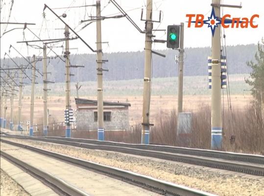 Екатеринбургские зоозащитники выявили вопиющие факты жестокого обращения с животными на железнодорожной станции «Арамиль»