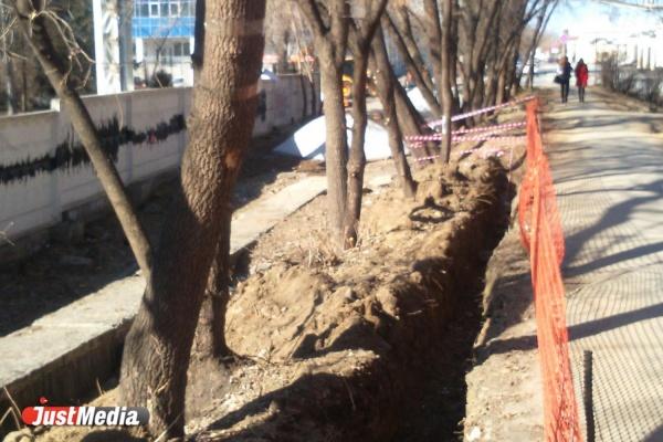 Жители Екатеринбурга боятся, что рабочие могут погубить Аллею любви