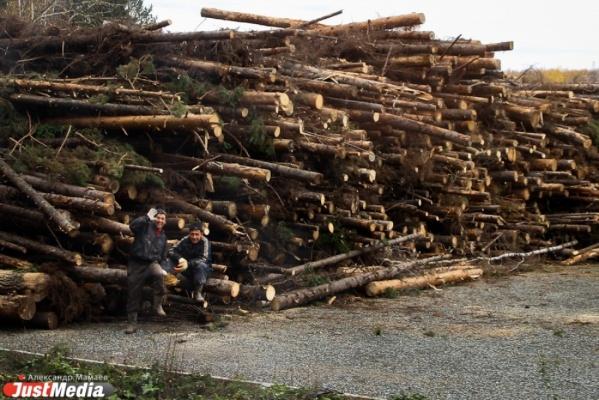 Работники «Первой лесопромышленной компании» из Алапаевска опасаются массовых сокращений
