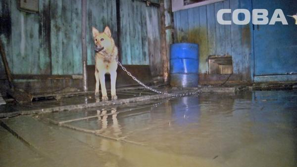 В Екатеринбурге частный дом на Южной залило талой водой. Хозяйка винит в этом застройщика близлежащей высотки