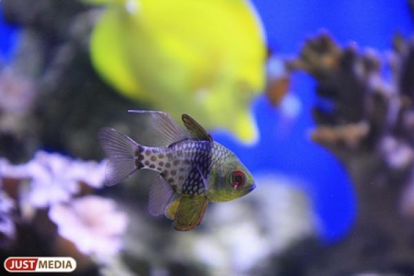 У жителя Екатеринбурга украли аквариум с рыбками стоимость более 300 тысяч рублей
