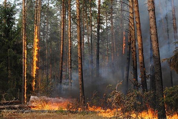 За последние сутки площадь лесных пожаров в Забайкалье увеличилась вдвое