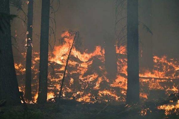 В Забайкальском крае задержан поджигатель леса