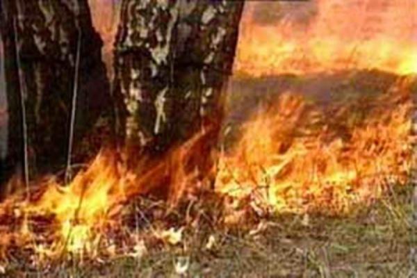 Подозреваемый в поджоге леса задержан в Забайкальском крае