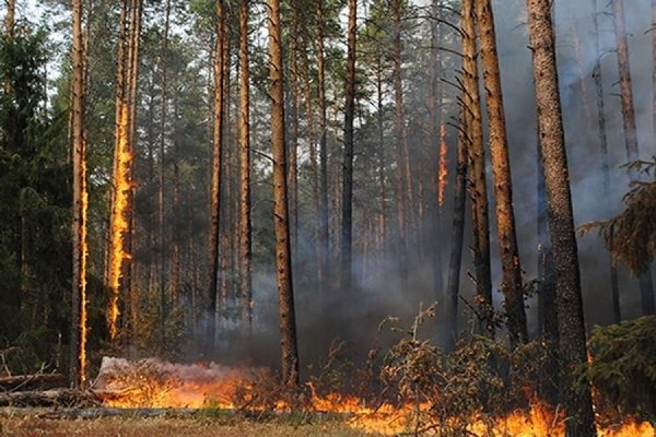 Площадь лесных пожаров в Забайкалье возросла до 192 тыс. гектаров