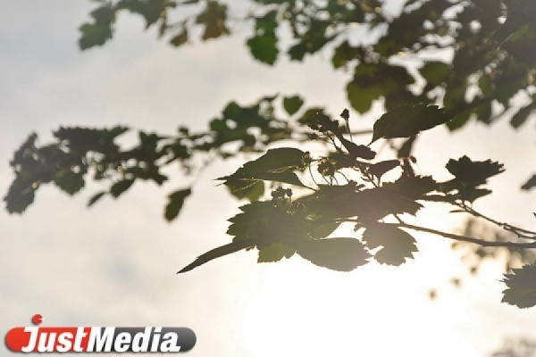 «Лес Победы» появится в Орловской области в память о воинах 380-й стрелковой дивизии