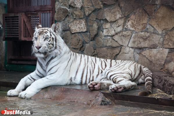 В Екатеринбургском зоопарке пройдет праздник Солнца