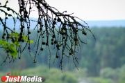 Неизвестные сливали нечистоты в Верхнесысертский пруд