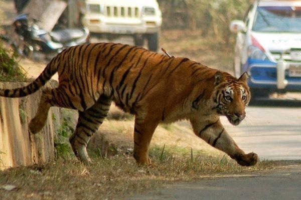 Тигры и другие дикие звери сбежали из сафари-парка в штате Оклахома во время торнадо