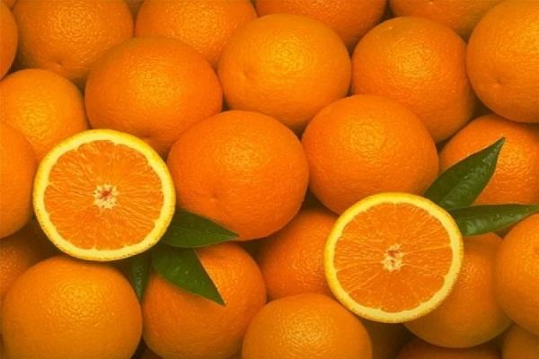 В Россию запрещен ввоз апельсинов из Египта