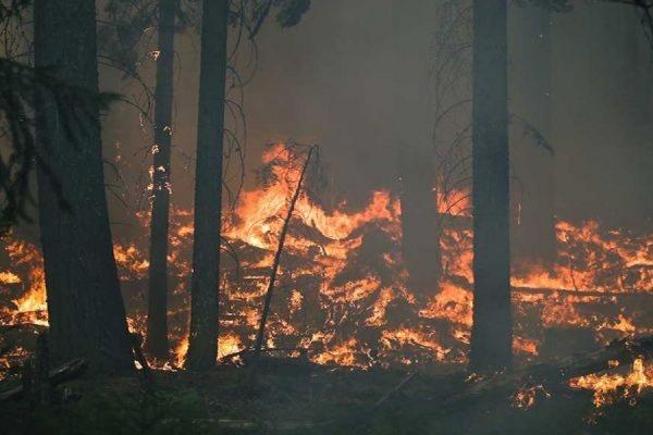 В Бурятии за прошедшие выходные площадь лесных пожаров увеличилась в 10 раз