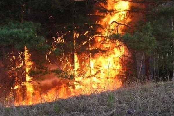 В Бурятии площадь лесных пожаров за сутки выросла почти втрое