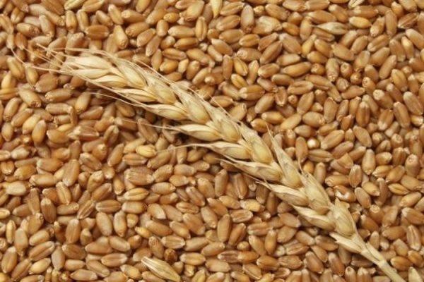 Правительство РФ отменило экспортную пошлину на пшеницу