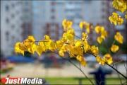 Жители Екатеринбурга придумают название для нового парка