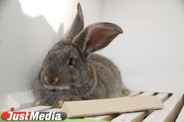 В Дании журналист убил кролика в прямом эфире