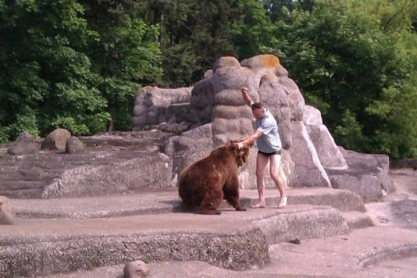 В зоопарке Варшавы мужчина залез в вольер с медведем и ударил его