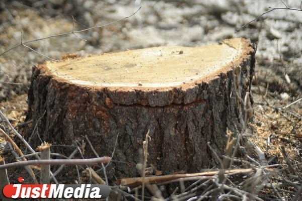 Бывшая чиновница областного департамента лесного хозяйства получила семь лет условно за взятку