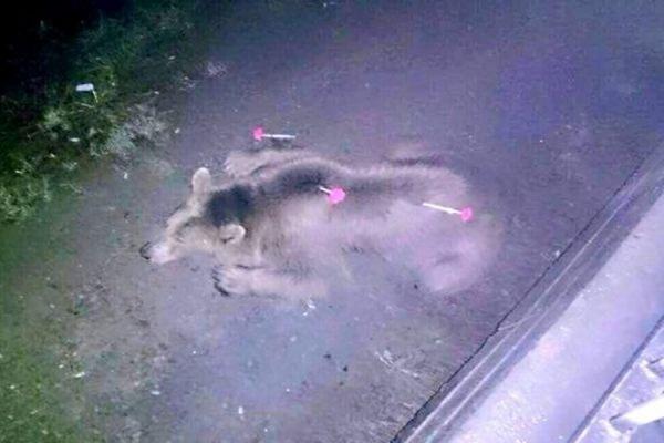 В Тбилиси в результате наводнения из зоопарка сбежали львы, тигры, волки и медведи