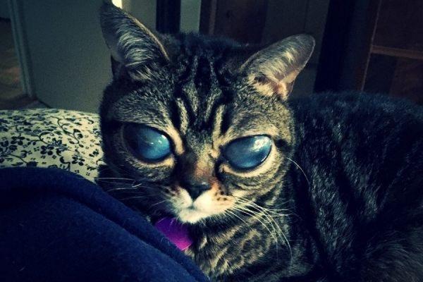 «Инопланетная» кошка Матильда с необычными глазами стала звездой Instagram