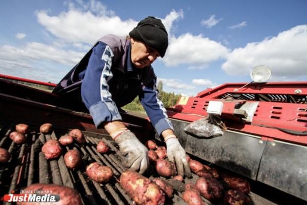 Свердловские аграрии получат свыше 22 миллионов рублей от Минсельхоза России