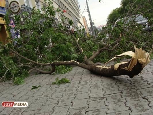 Упавшие деревья, побитые машины и отсутствие света. В Свердловской области устраняют последствия грозы