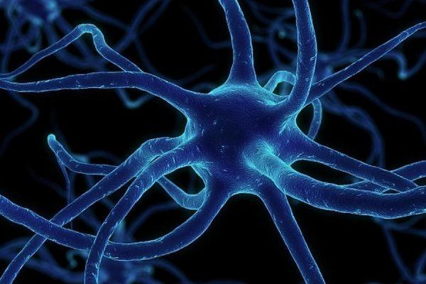 В Швеции ученым удалось создать искусственную нервную клетку
