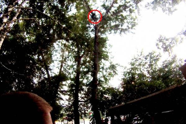 На ЖБИ спасатели сняли с дерева парня, который пытался спасти дочь президента