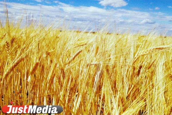 Сев зерновых завершили более ста свердловских сельских хозяйств