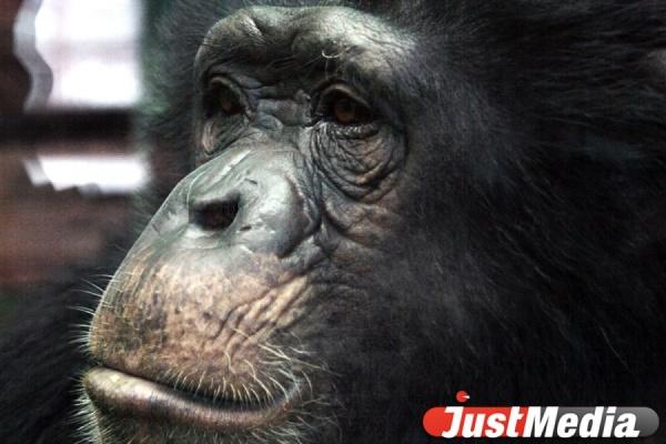 Холодная погода вынудила животных Екатеринбургского зоопарка вернуться в зимние вольеры